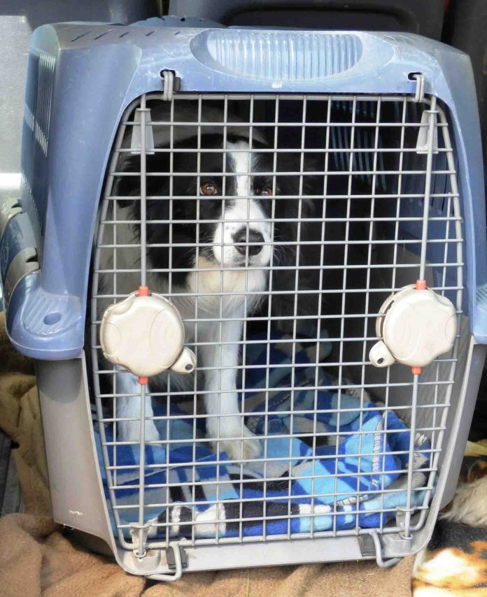 gabbie per cani